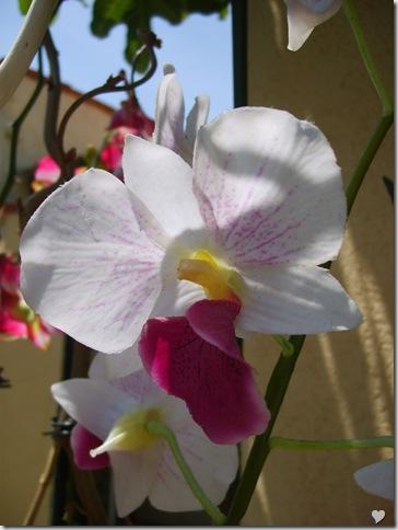 Casa cu orhidee