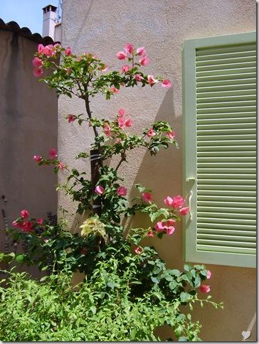 Austeritate cu ...flori