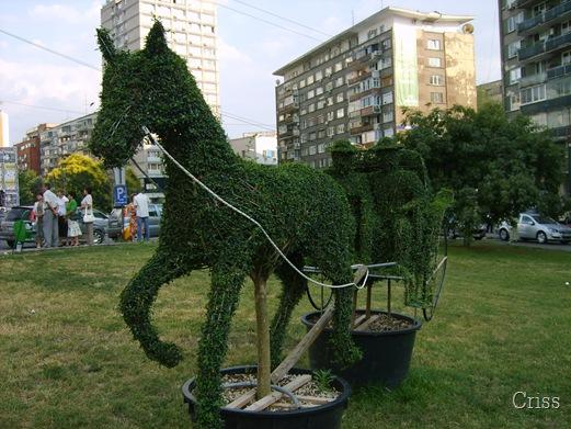 Calul verde si trasura eco