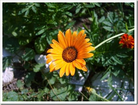 Flori și culori