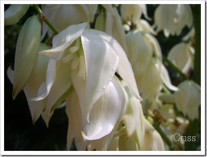 Flori  puțin ....exotice