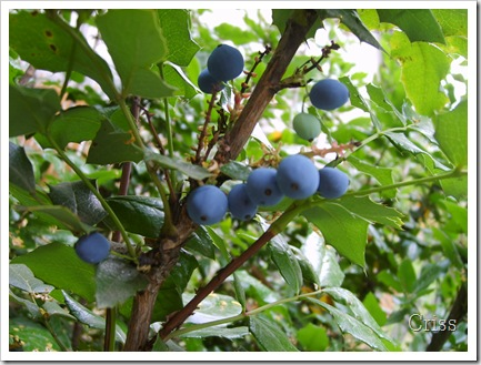 Fructe de...pădure