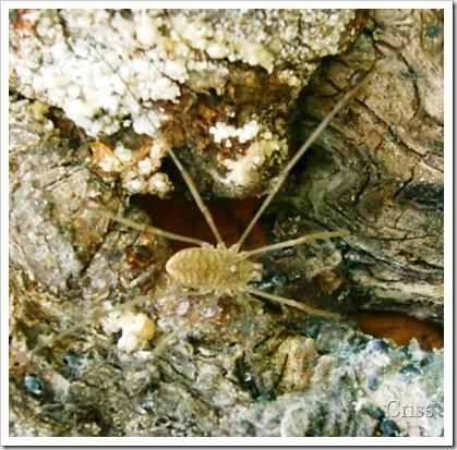 Păianjenul de...copac
