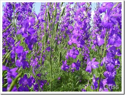 Printre flori