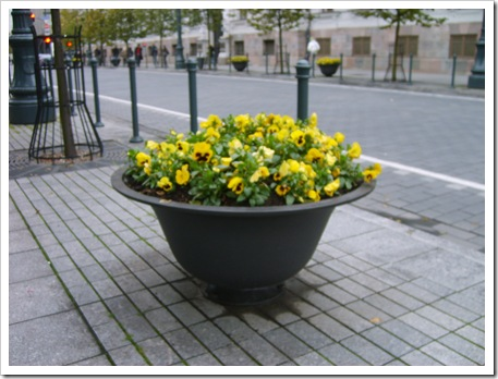 În toată acestă austeritate se ivesc și...florile