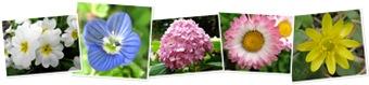 Vizualizare Flori,flori