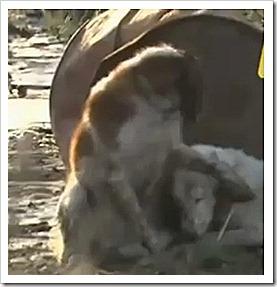 Câinele care nu și-a părărsit prietenul