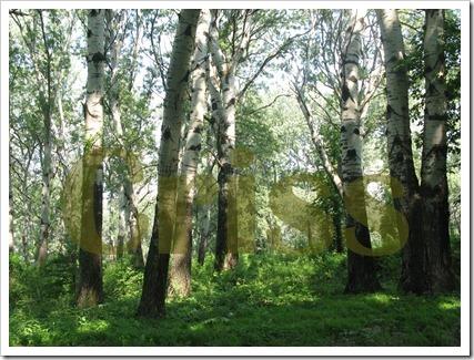Pădurea de pe fostul domeniu (4)-1
