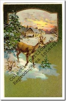 Carti postale vechi (7)-001