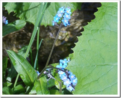 (Micro)flori albastre