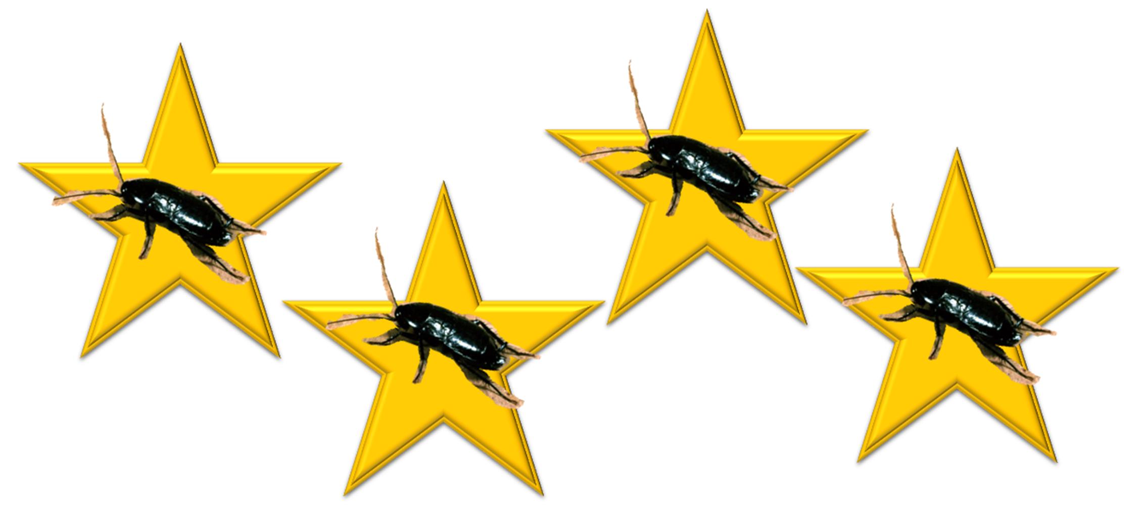 """Gândaci de 4 stele la hotelul """"Best"""" din Ploiești"""