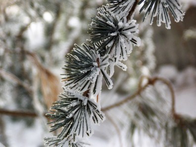 frozen-ii-11