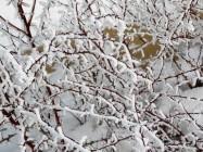 frozen-ii-12