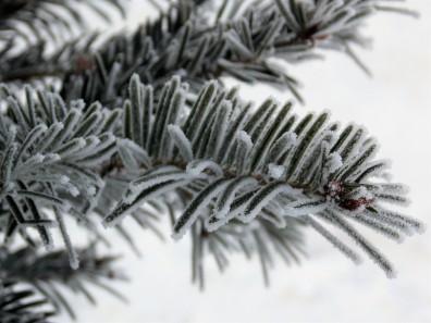 frozen-ii-2