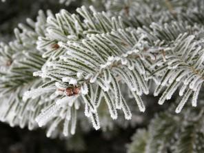 frozen-ii-4