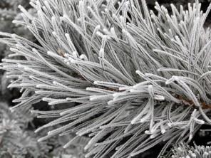 frozen-ii-5